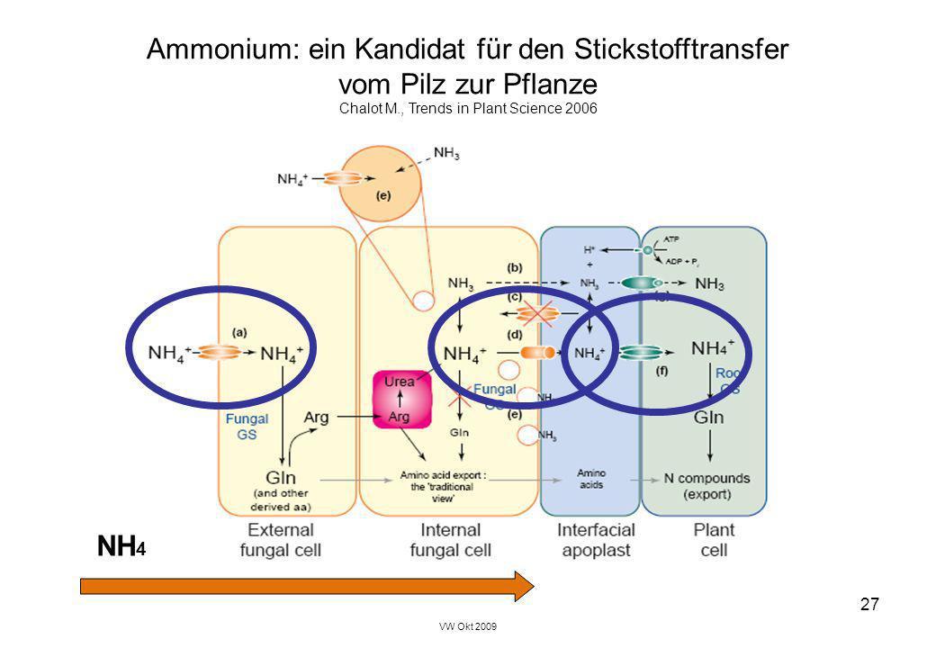 Ammonium: ein Kandidat für den Stickstofftransfer vom Pilz zur Pflanze
