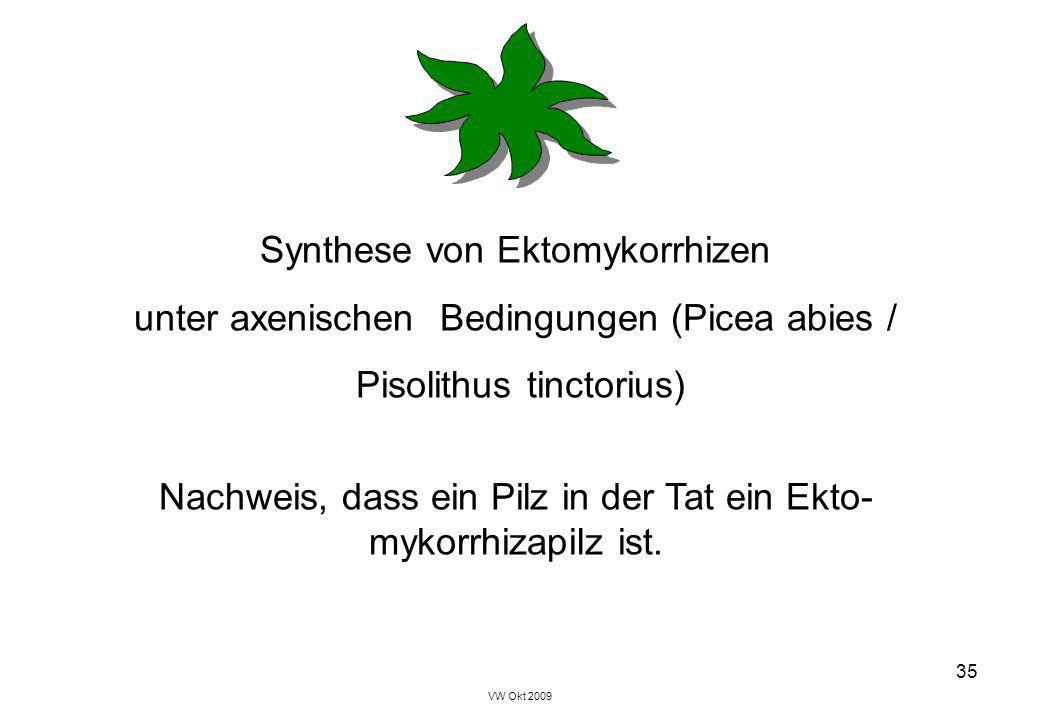 Synthese von Ektomykorrhizen