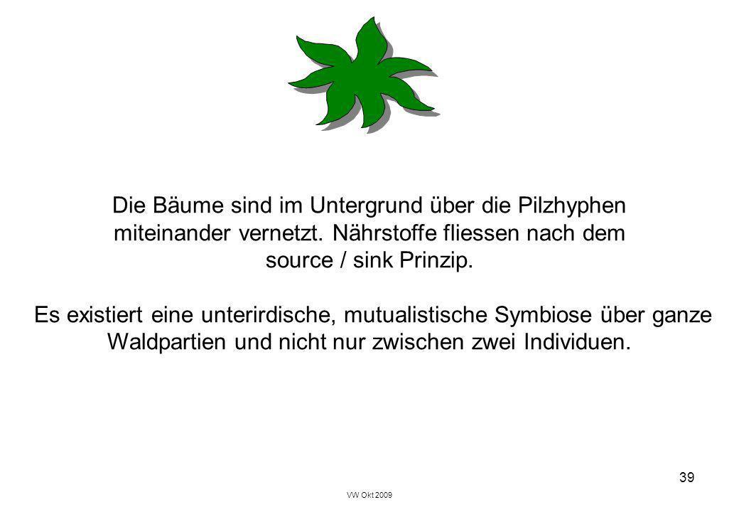 Die Bäume sind im Untergrund über die Pilzhyphen