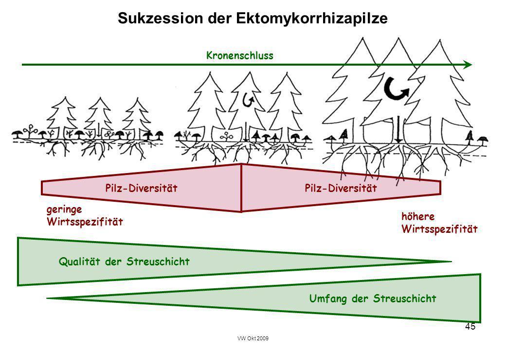 Sukzession der Ektomykorrhizapilze
