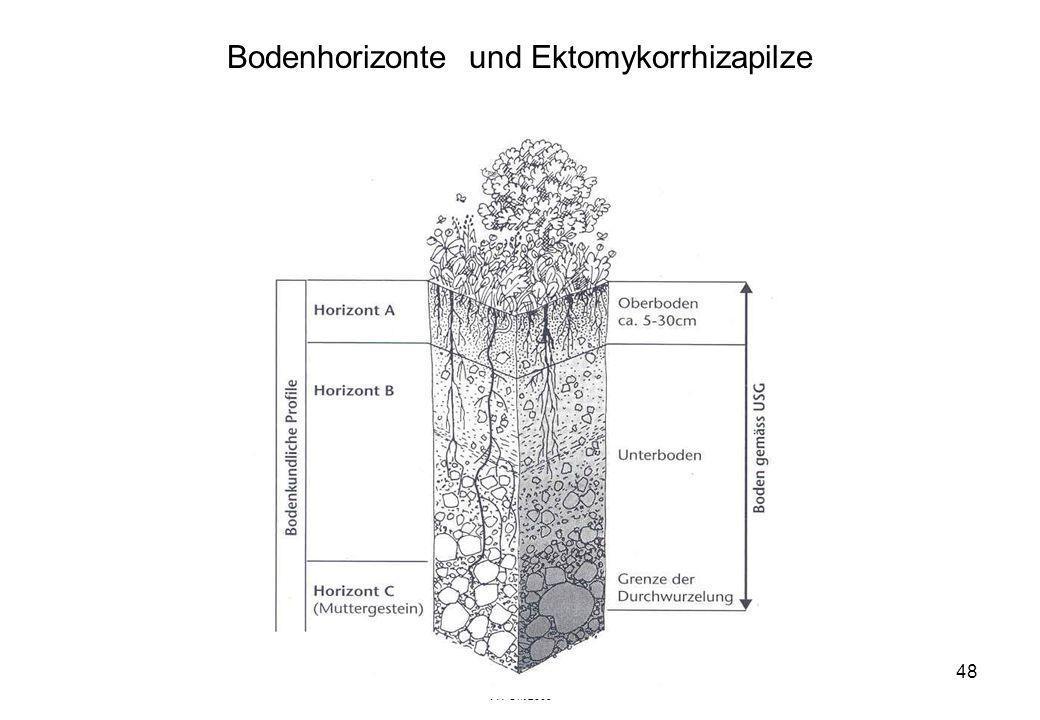 Bodenhorizonte und Ektomykorrhizapilze