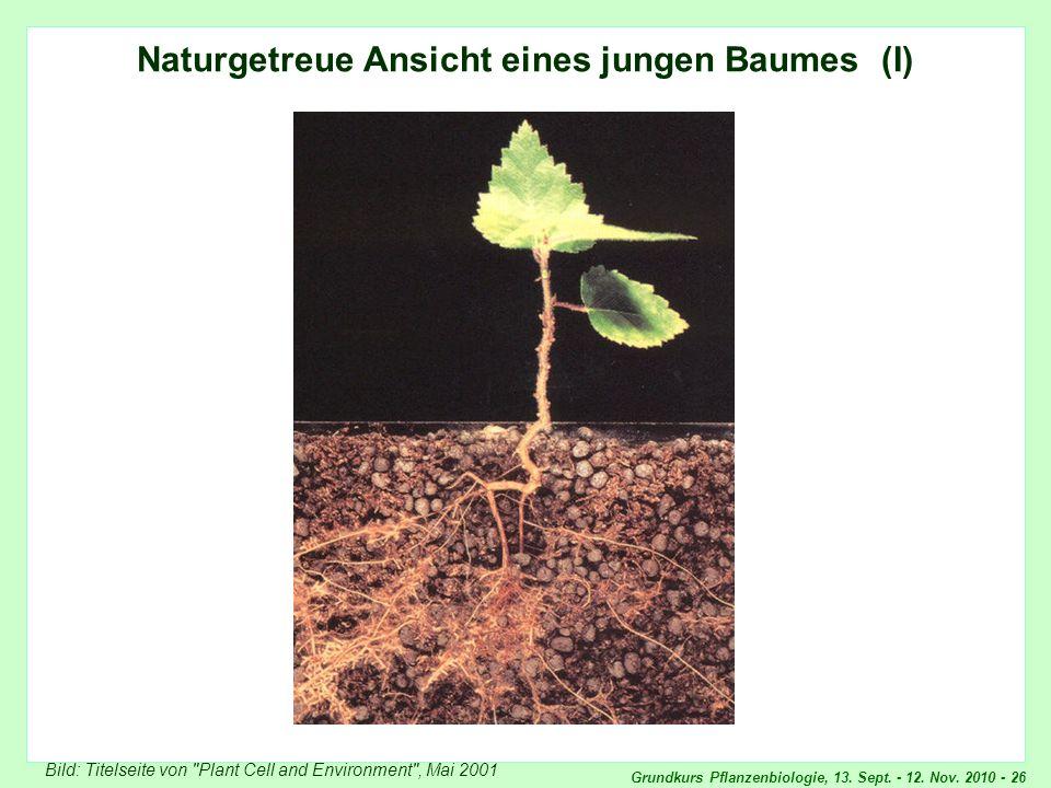 Naturgetreue Ansicht eines jungen Baumes (1)