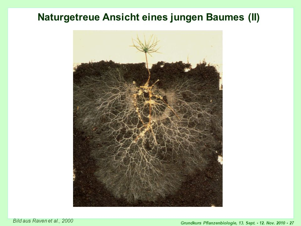 Naturgetreue Ansicht eines jungen Baumes (2)