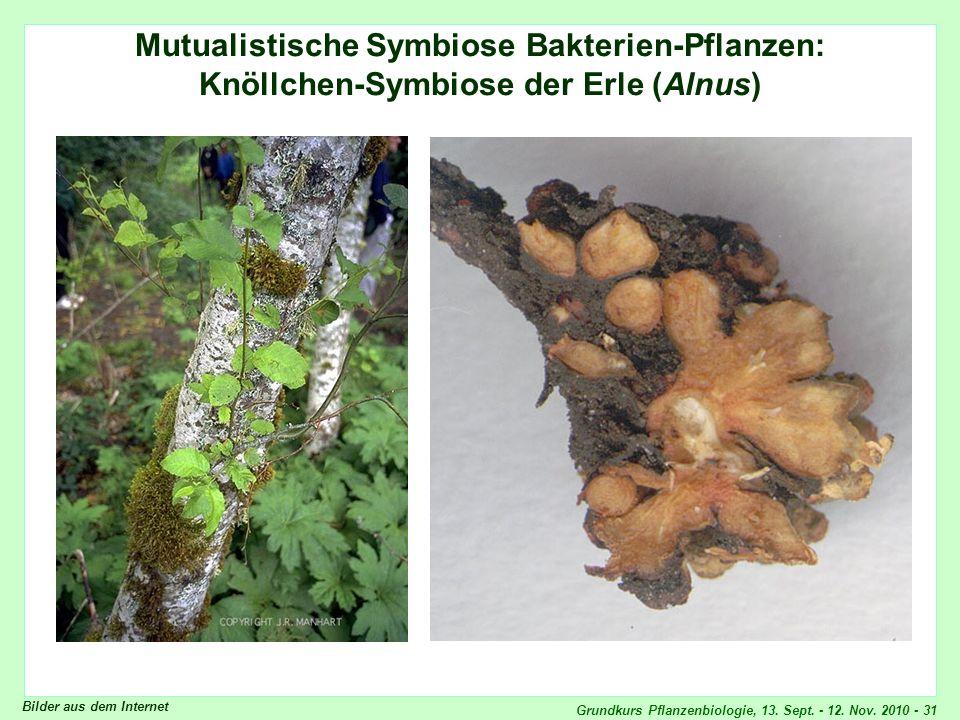 Mutualistische Symbiose Bakterien-Pflanzen:
