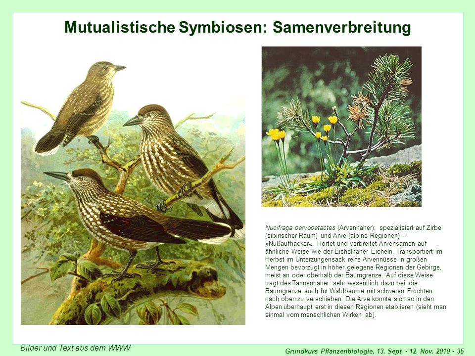 Mutualistische Symbiosen: Samenverbreitung
