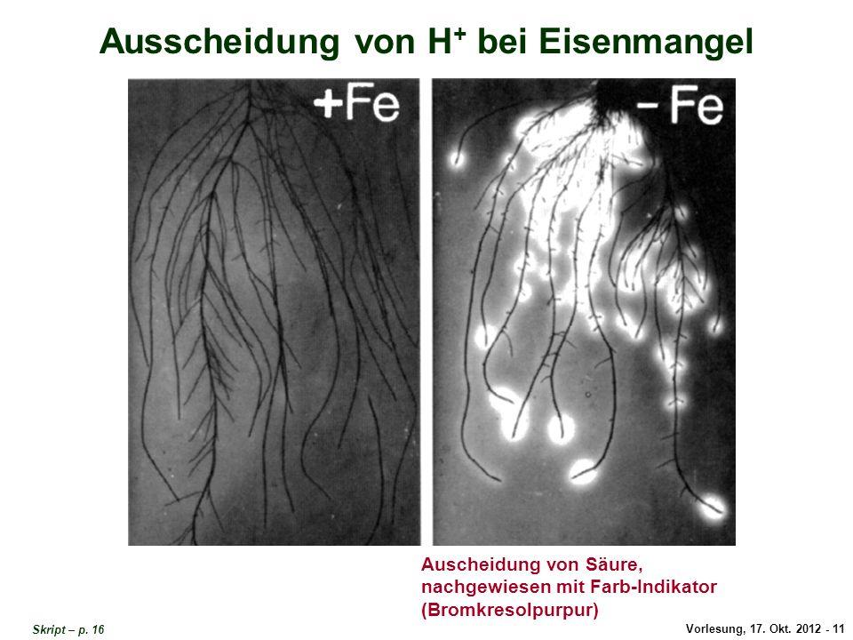 Ausscheidung Protonen / Eisenmangel