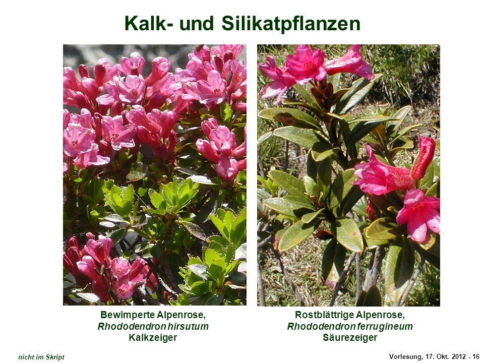 Alpenrosen / Kalk- und Silikat