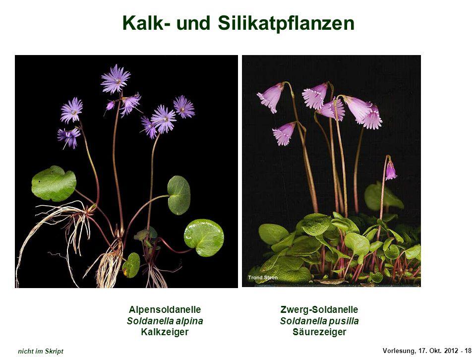 Enziane / Kalk- und Silikat
