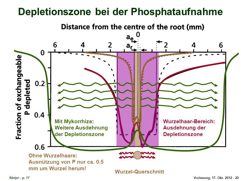 Depletionszone bei der Phosphataufnahme