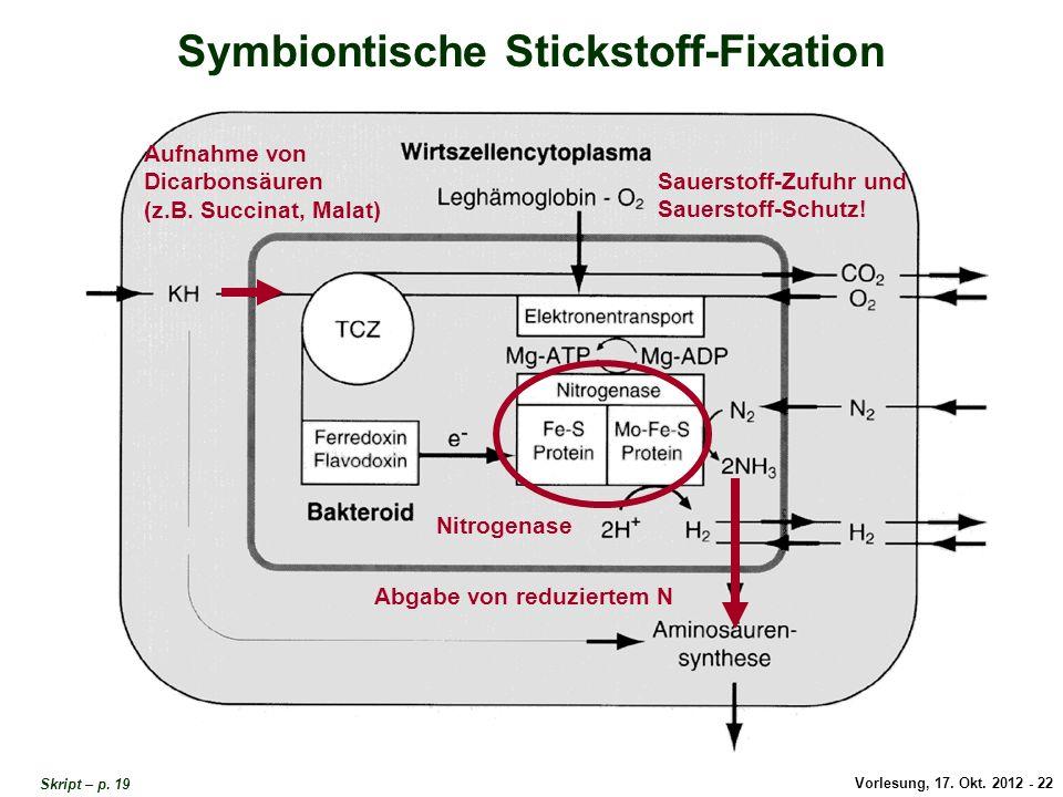 Symbiontische Stickstoff-Fixation 2