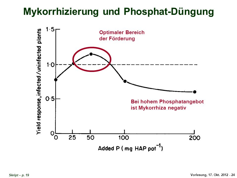 Mykorrhizierung und Phosphat-Düngung