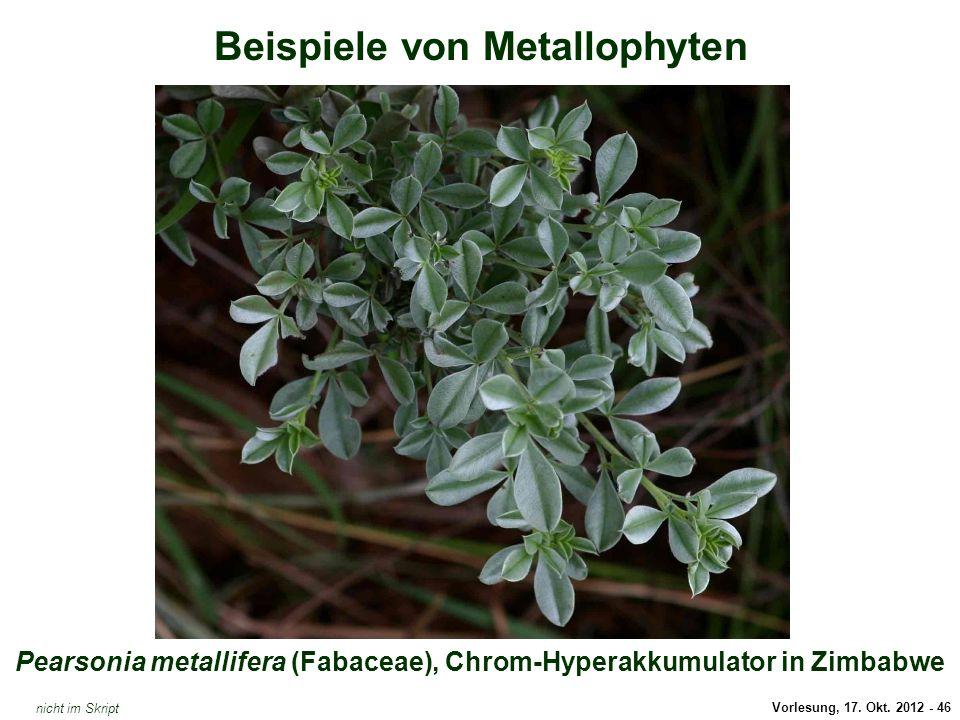 Pearsonia metallifera (Chrom-Hyperakkumulator)