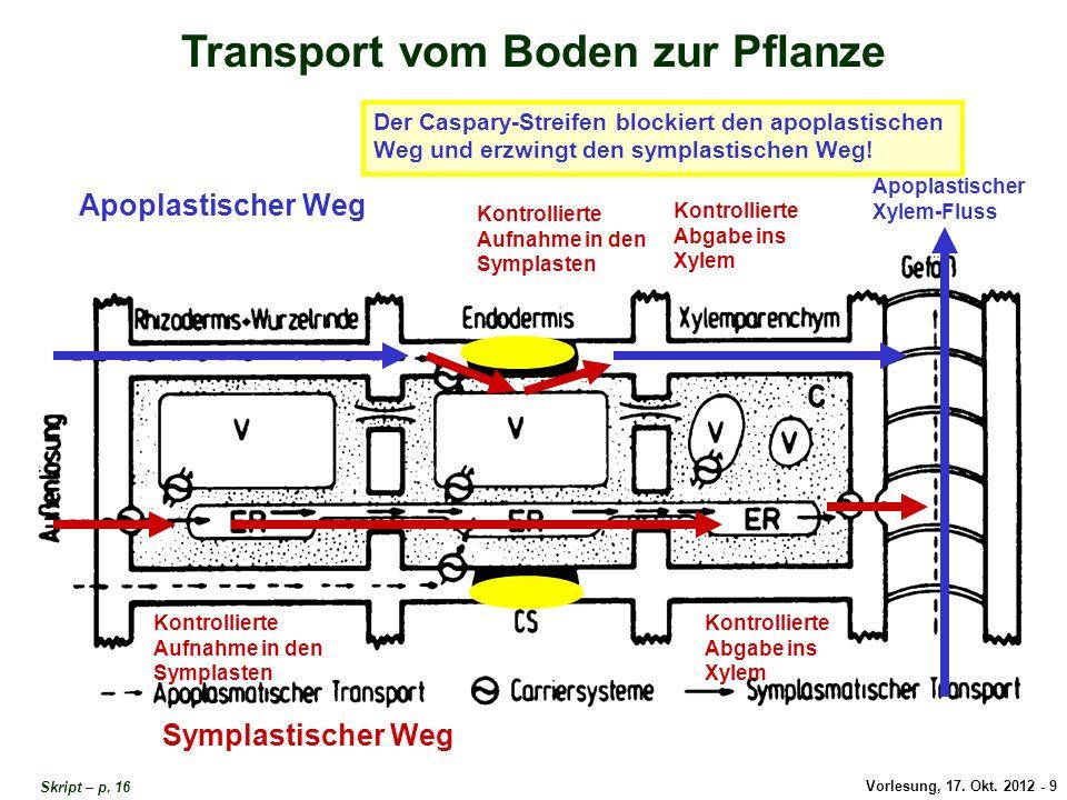 Transport vom Boden zur Pflanze 1