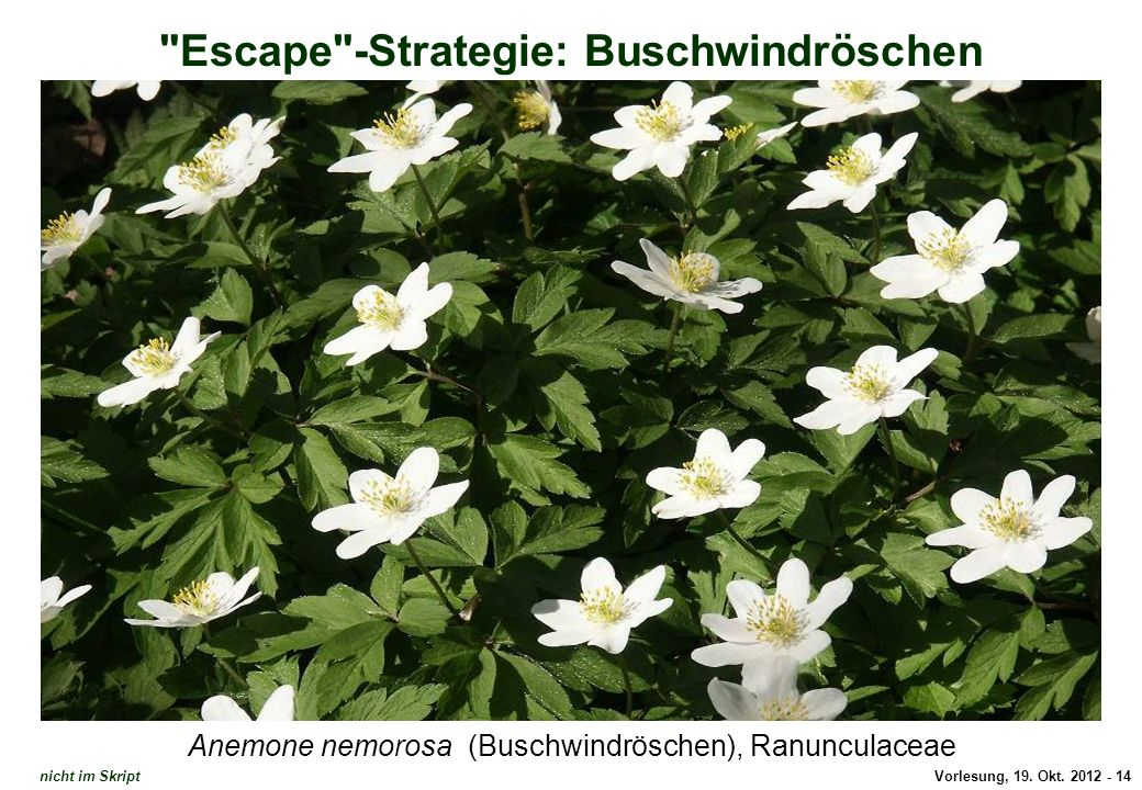 Escape-Strategie: Waldmeister