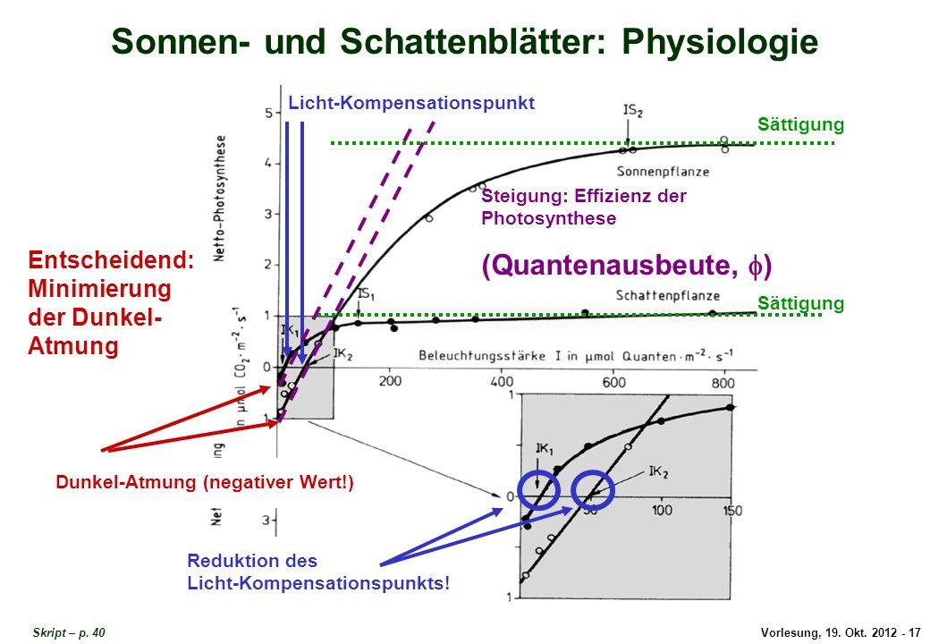 Sonnen- und Schattenblätter: Physiologie