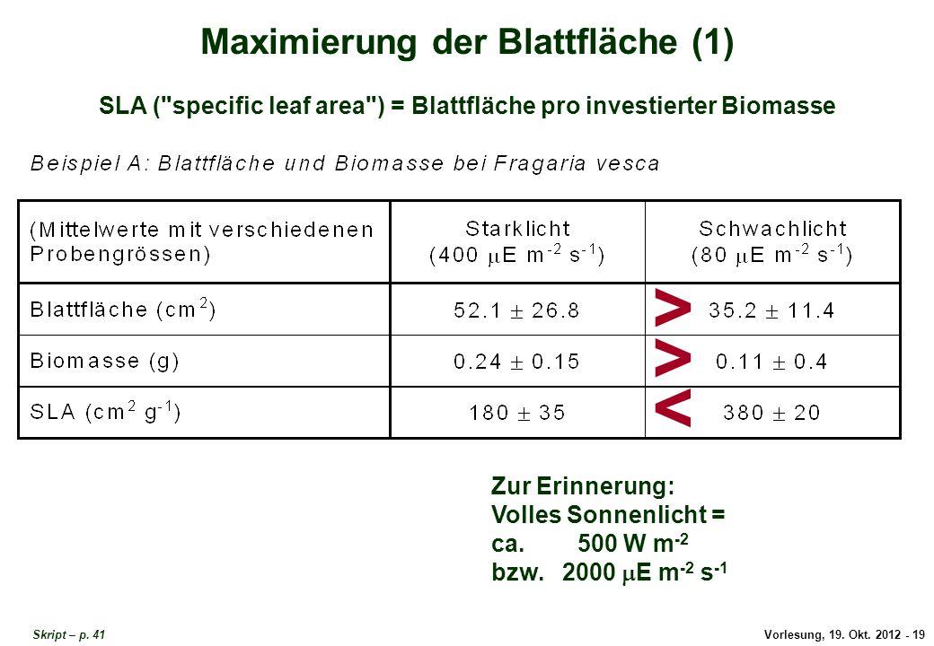 Maximierung der Blattfläche 1