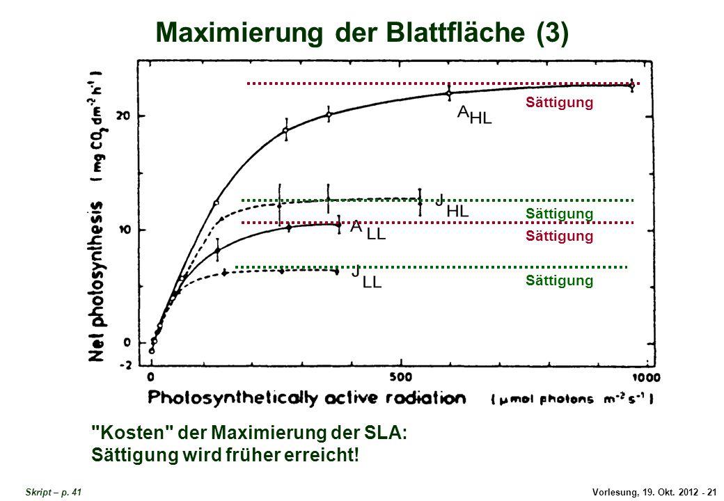 Maximierung der Blattfläche 3