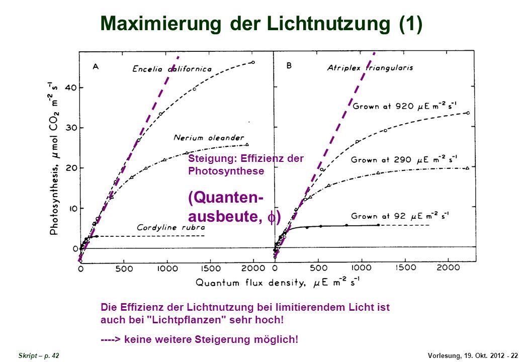 Maximierung der Lichtnutzung 1