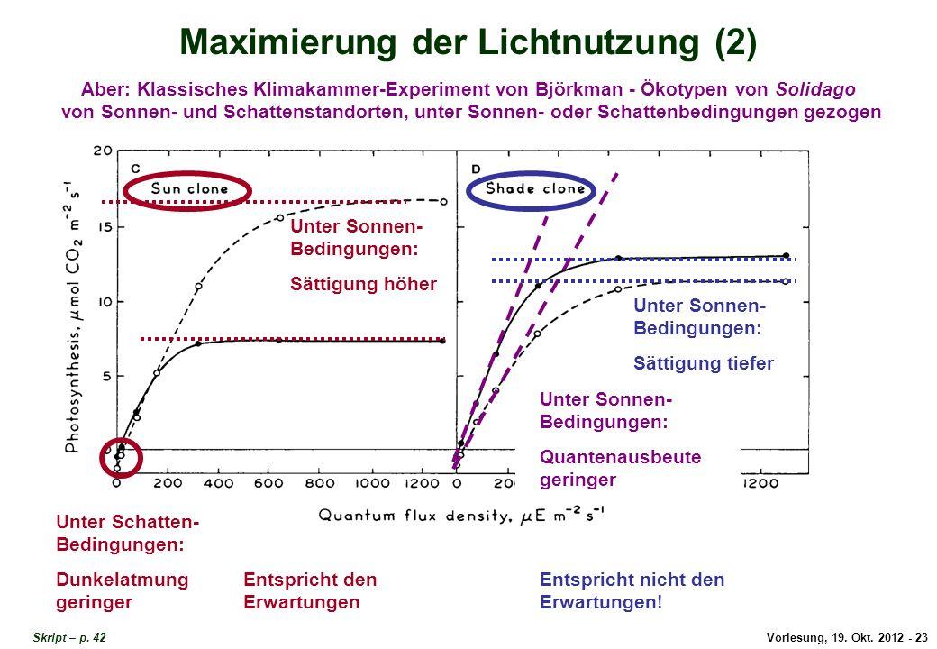Maximierung der Lichtnutzung 2