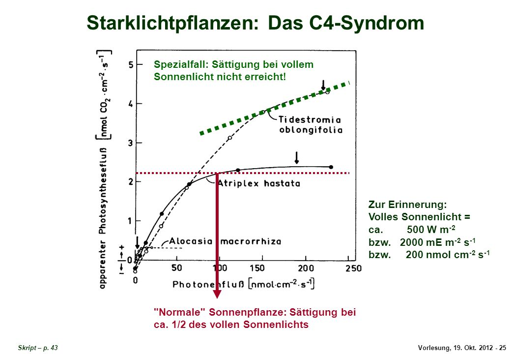 Starklichtpflanzen: Das C4-Syndrom