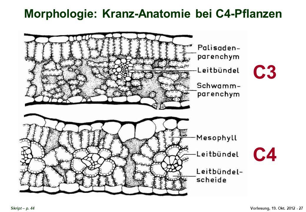 Morphologie: Kranz-Anatomie bei C4-Pflanzen
