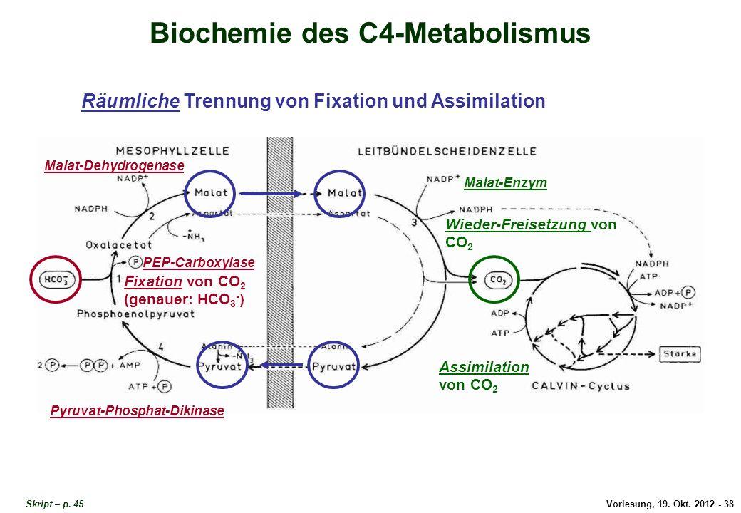 Biochemie des C4-Metabolismus