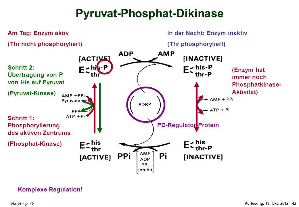 Pyruvat-Phosphat-Dikinase