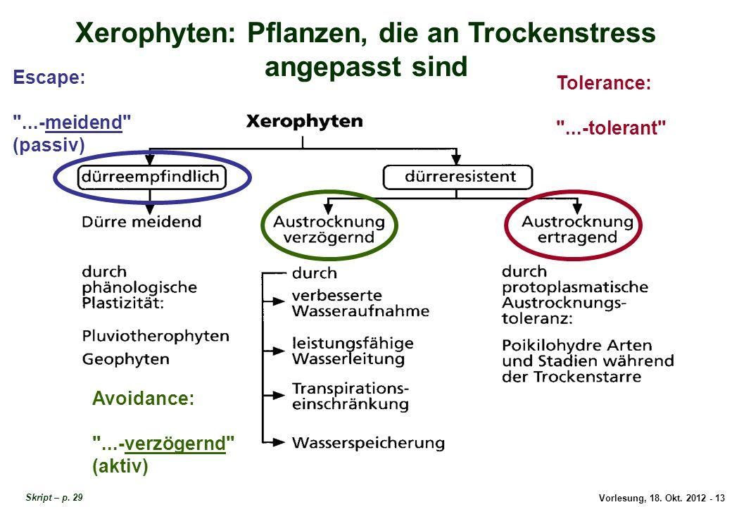 Xerophyten: Pflanzen, die an Trockenstress angepasst sind