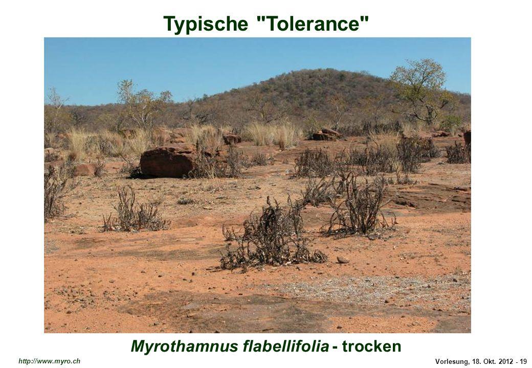 Typische Tolerance: Craterostigma