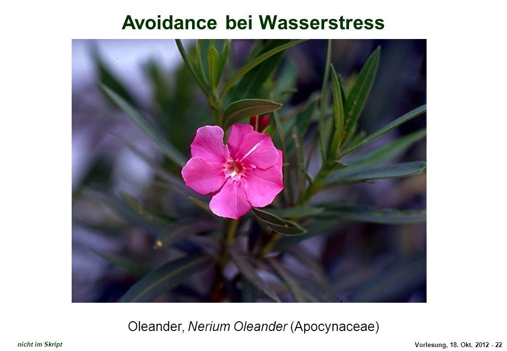 Avoidance: Nerium Oleander