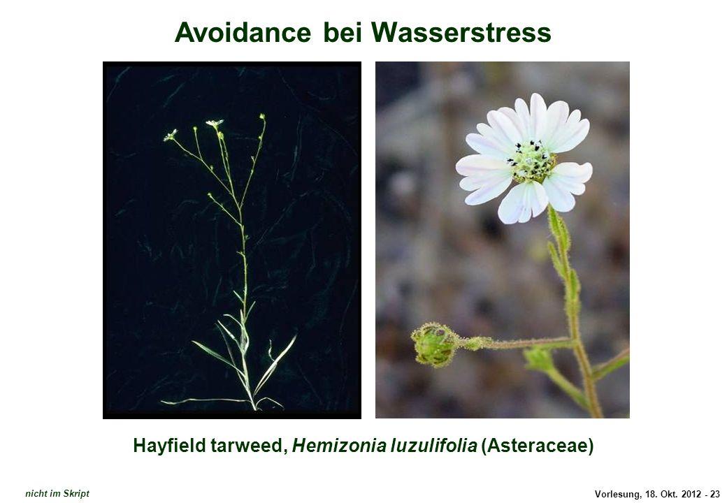 Avoidance: Hemizonia luzulifolia