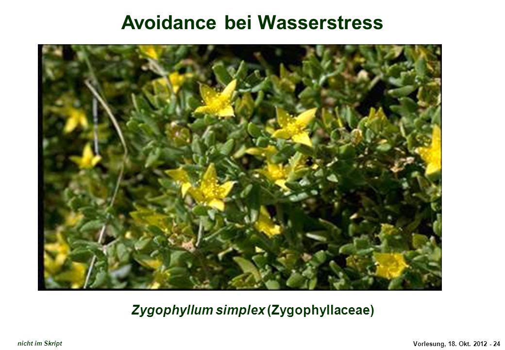 Avoidance: Zygophyllum simplex