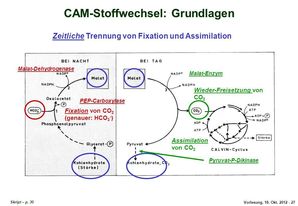 CAM-Stoffwechsel: Grundlagen