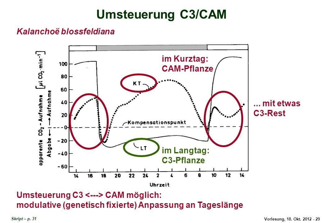 Umsteuerung C3/CAM Kalanchoë blossfeldiana im Kurztag: CAM-Pflanze