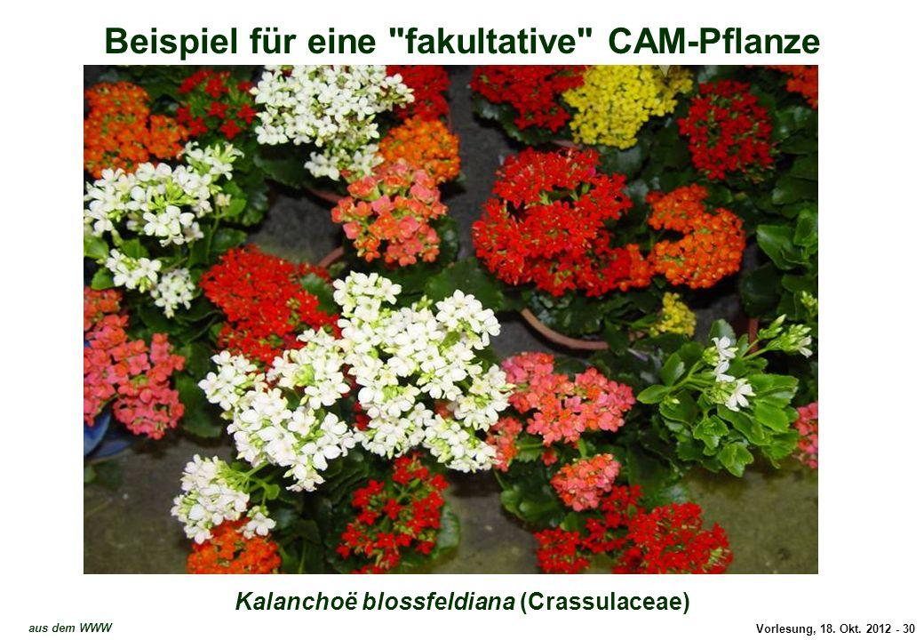 Beispiel für eine fakultative CAM-Pflanze