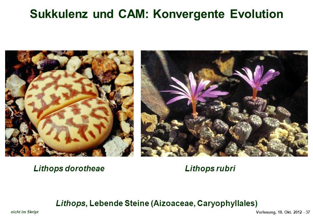 Sukkulenz und CAM: Konvergente Evolution