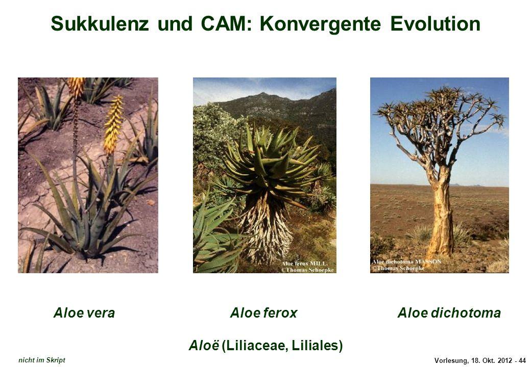 Sukkulenz und CAM: Konvergente Evolution Aloë (Liliaceae, Liliales)