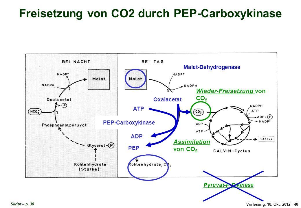 Freisetzung von CO2 durch PEP-Carboxykinase