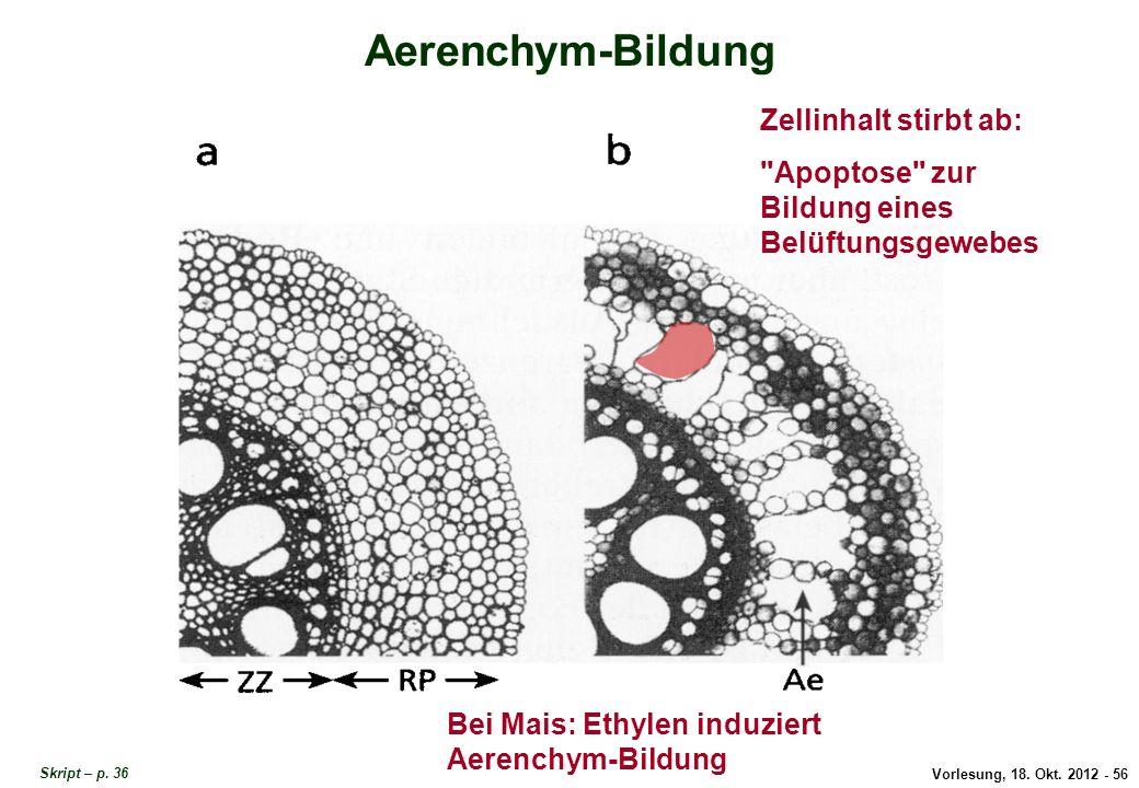 Aerenchym-Bildung Zellinhalt stirbt ab: