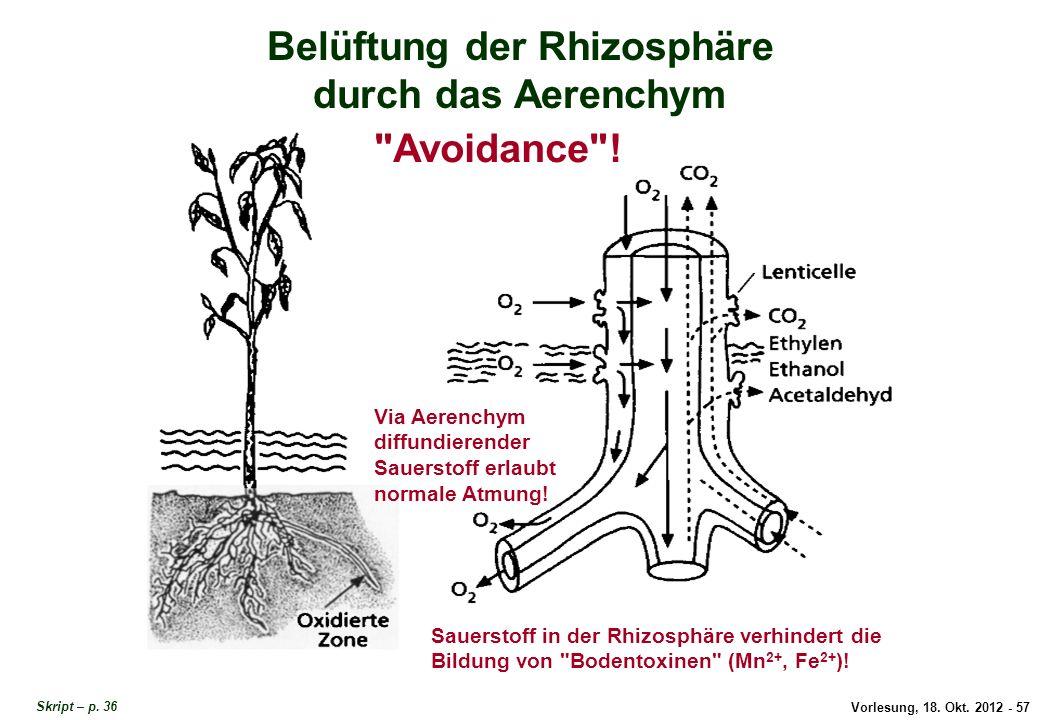 Belüftung der Rhizosphäre