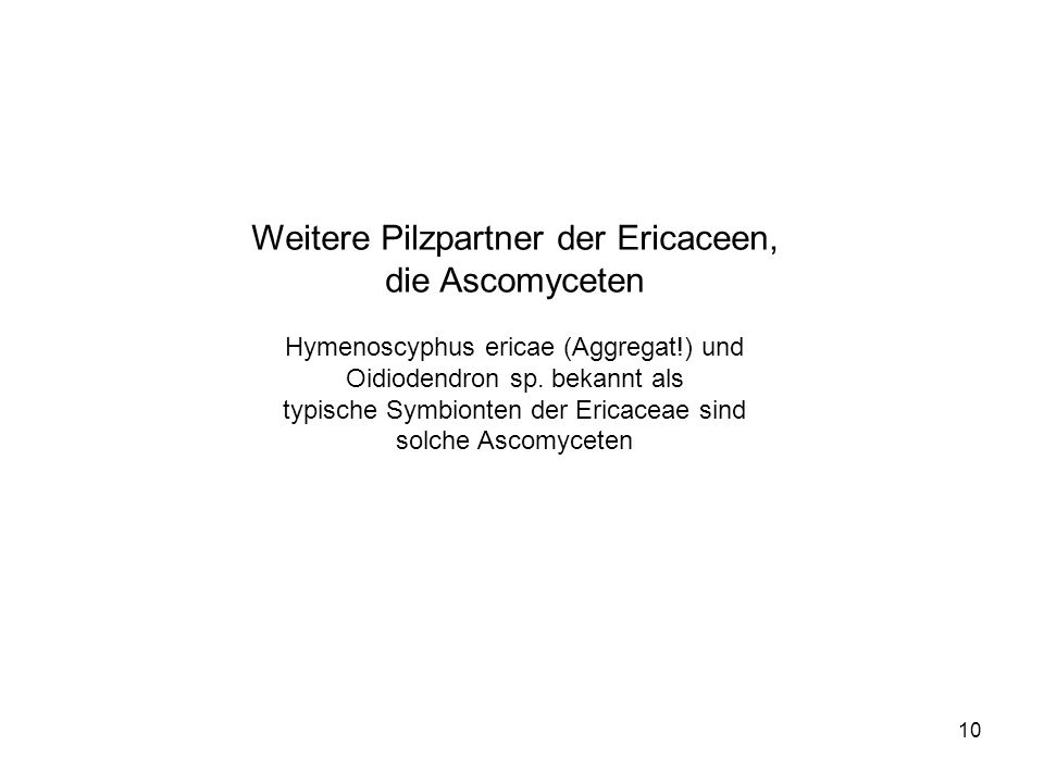 Weitere Pilzpartner der Ericaceen, die Ascomyceten