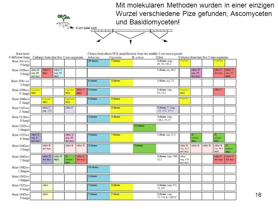 Mit molekularen Methoden wurden in einer einzigen