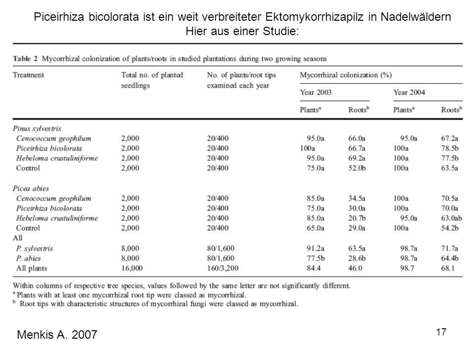 Piceirhiza bicolorata ist ein weit verbreiteter Ektomykorrhizapilz in Nadelwäldern