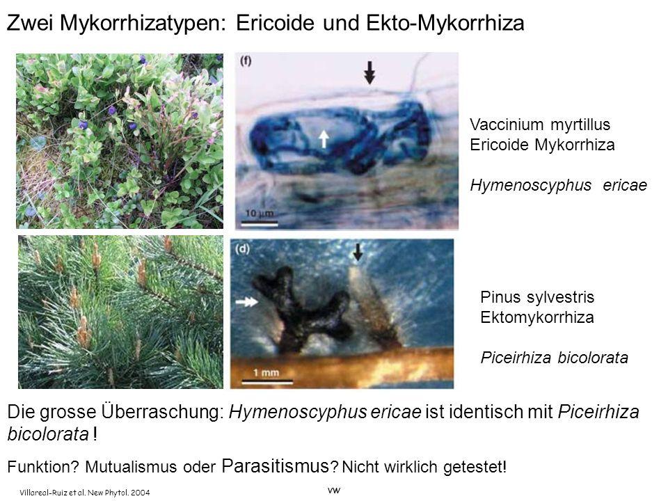 Zwei Mykorrhizatypen: Ericoide und Ekto-Mykorrhiza