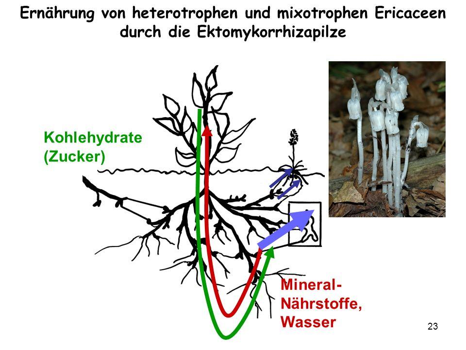 Ernährung von heterotrophen und mixotrophen Ericaceen