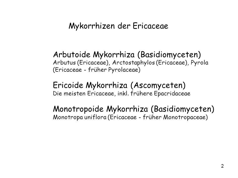 Mykorrhizen der Ericaceae
