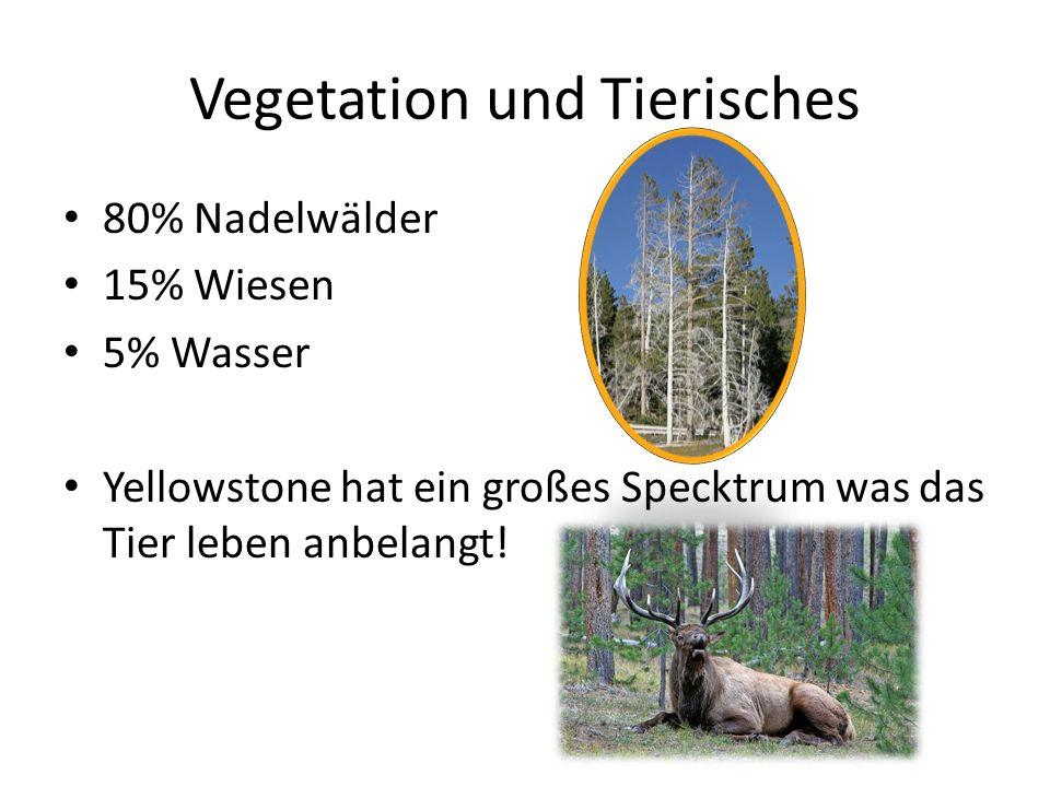 Vegetation und Tierisches