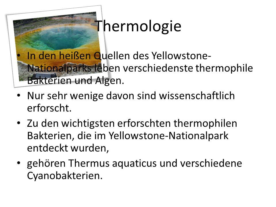 Thermologie In den heißen Quellen des Yellowstone-Nationalparks leben verschiedenste thermophile Bakterien und Algen.