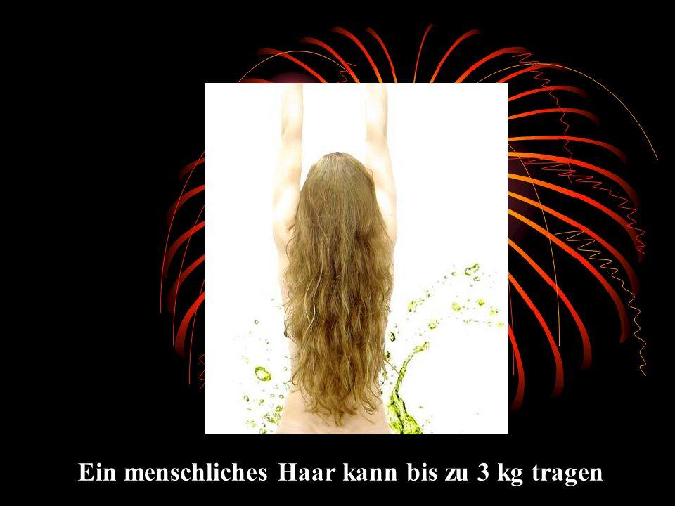 Ein menschliches Haar kann bis zu 3 kg tragen