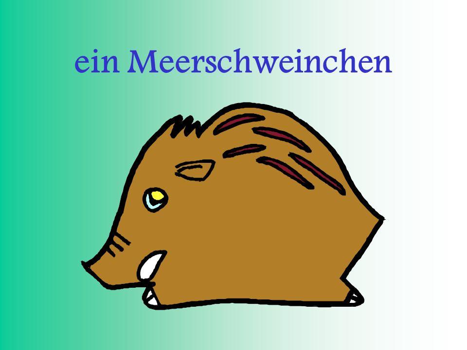 ein Meerschweinchen